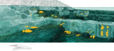 BW habitats